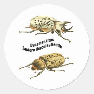 Eastern Hercules Beetle Round Sticker