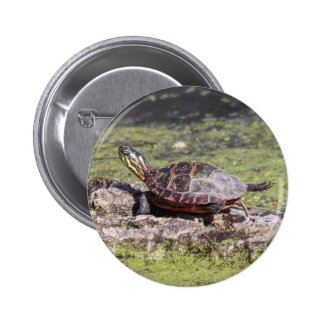 Eastern Painted Turtle 6 Cm Round Badge