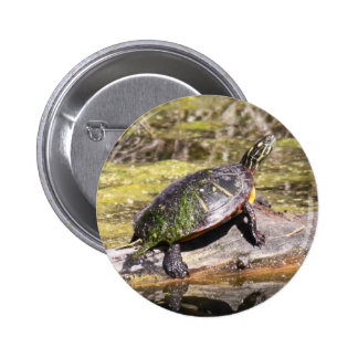 Eastern Painted Turtle Pin