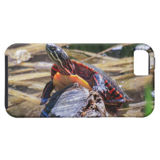 Eastern Painted Turtle iPhone 5/5S Covers