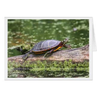 Eastern Painted Turtle Greeting Card