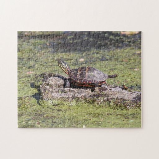 Eastern Painted Turtle Puzzle