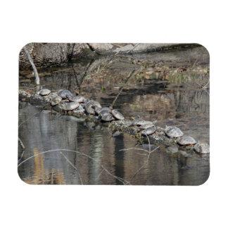 Eastern Painted Turtle Rectangular Photo Magnet
