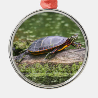 Eastern Painted Turtle Silver-Colored Round Decoration