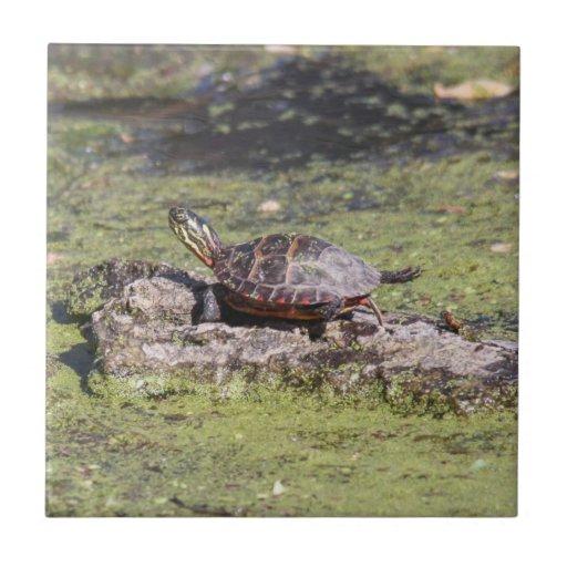 Eastern Painted Turtle Tile