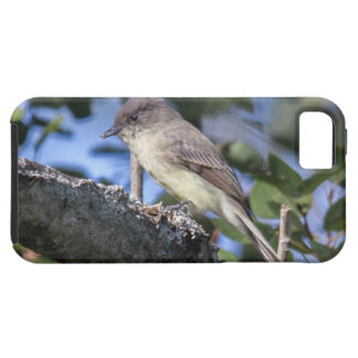 Eastern Phoebe Tough iPhone 5 Case