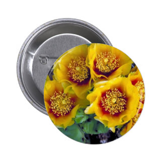 Eastern prickly pear cactus button