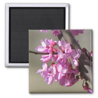 Eastern Redbud Blooms Magnet