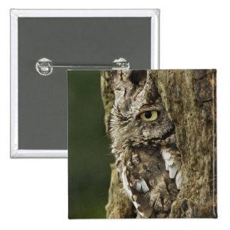 Eastern Screech Owl Gray Phase) Otus asio, Buttons