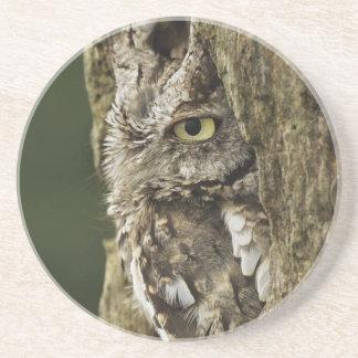 Eastern Screech Owl Gray Phase) Otus asio, Beverage Coaster