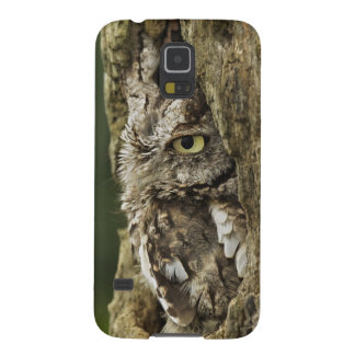 Eastern Screech Owl Gray Phase) Otus asio, Cases For Galaxy S5