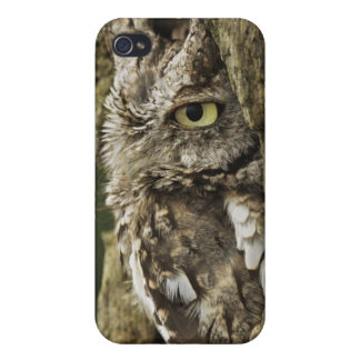 Eastern Screech Owl Gray Phase) Otus asio, Case For The iPhone 4
