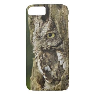 Eastern Screech Owl Gray Phase) Otus asio, iPhone 7 Case