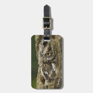 Eastern Screech Owl Gray Phase) Otus asio, Tags For Luggage
