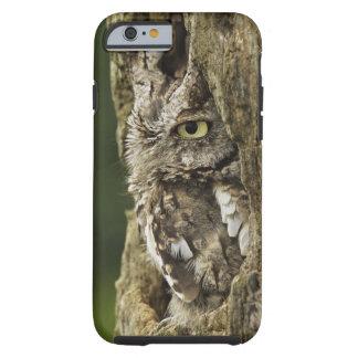 Eastern Screech Owl Gray Phase) Otus asio, Tough iPhone 6 Case