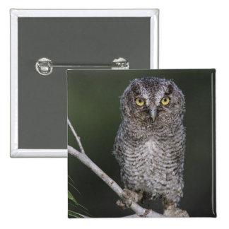 Eastern Screech-Owl Megascops asio Otus 2 Button