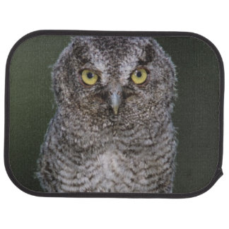 Eastern Screech-Owl, Megascops asio, Otus 2 Floor Mat