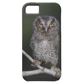 Eastern Screech-Owl, Megascops asio, Otus 2 iPhone 5 Cases