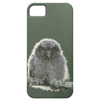 Eastern Screech-Owl, Megascops asio, Otus 3 Barely There iPhone 5 Case