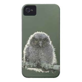 Eastern Screech-Owl, Megascops asio, Otus 3 Case-Mate Blackberry Case