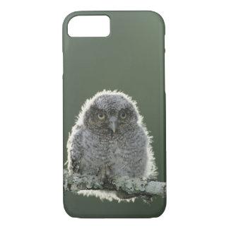 Eastern Screech-Owl, Megascops asio, Otus 3 iPhone 7 Case