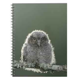Eastern Screech-Owl, Megascops asio, Otus 3 Note Books
