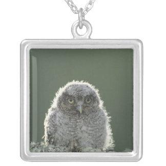 Eastern Screech-Owl, Megascops asio, Otus 3 Square Pendant Necklace