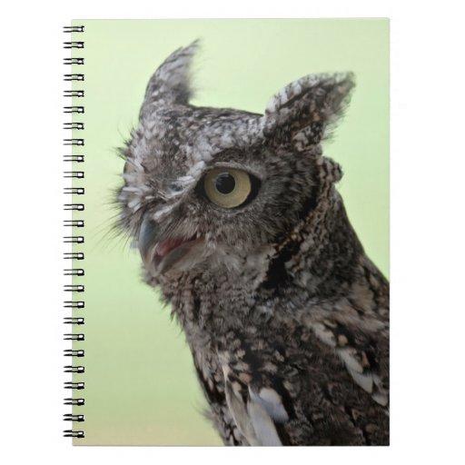 Eastern Screech Owl notebook