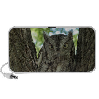 Eastern Screech Owl Photo  Speaker