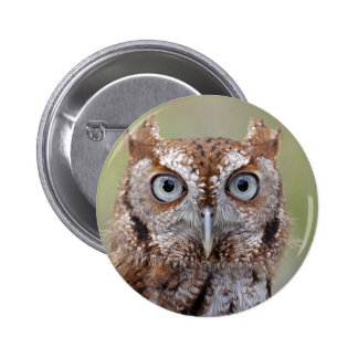 Eastern Screech Owl Photograph 6 Cm Round Badge