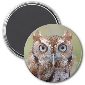 Eastern Screech Owl Photograph 7.5 Cm Round Magnet