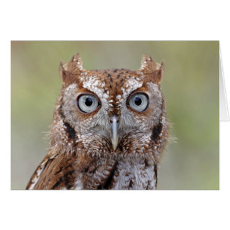 Eastern Screech Owl Photograph Greeting Card