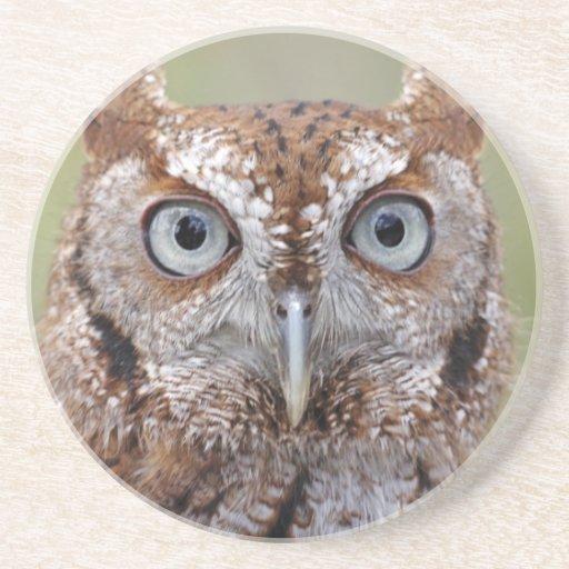 Eastern Screech Owl Photograph Coaster