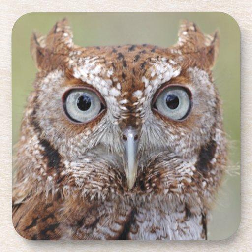 Eastern Screech Owl Photograph Cork Coasters