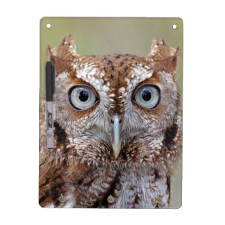 Eastern Screech Owl Photograph Dry Erase Boards