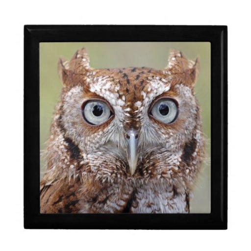 Eastern Screech Owl Photograph Gift Box