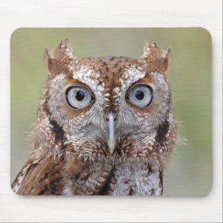Eastern Screech Owl Photograph Mouse Pad