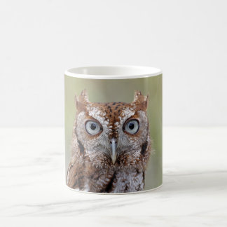 Eastern Screech Owl Photograph Basic White Mug