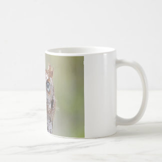 Eastern Screech Owl Photograph Mugs