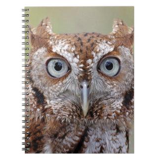 Eastern Screech Owl Photograph Notebook