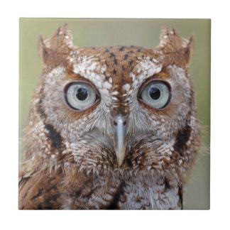 Eastern Screech Owl Photograph Tile