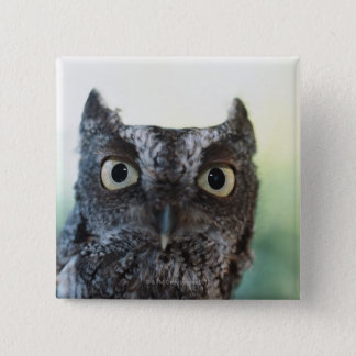 Eastern Screech Owl Portrait Showing Large Eyes 15 Cm Square Badge