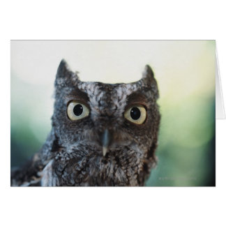 Eastern Screech Owl Portrait Showing Large Eyes Card