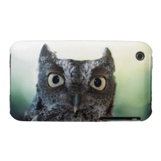 Eastern Screech Owl Portrait Showing Large Eyes Case-Mate iPhone 3 Cases
