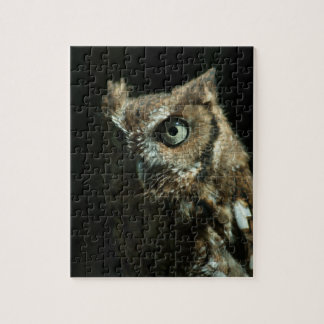 Eastern Screech Owl Puzzle
