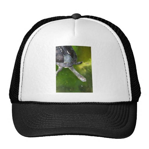 Eastern Snake-Necked Turtle Hats