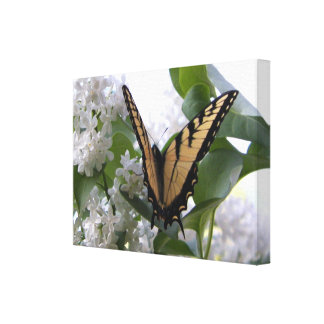 Eastern Tiger Swallow Tail on White Lilac Bush Canvas Print
