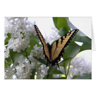 Eastern Tiger Swallow Tail on White Lilac Bush Note Card