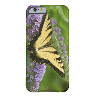Eastern Tiger Swallowtail butterfly Barely There iPhone 6 Case