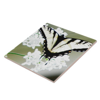 Eastern Tiger Swallowtail Butterfly Photo Large Square Tile